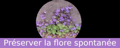 Biodiversité urbaine : préserver la flore spontanée