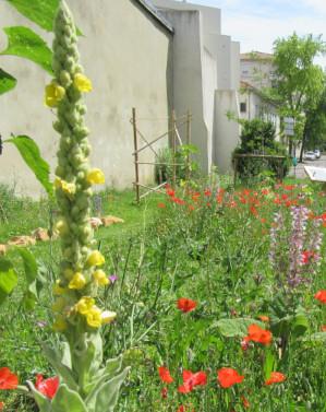 Jardin de la biodiversité Gambetta