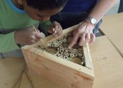 Contruire un nichoir à abeilles sauvages