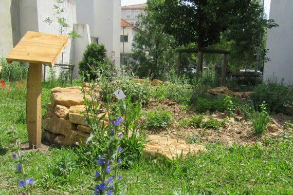 Jardin de la biodiversité Gambetta : massif d'aromatiques