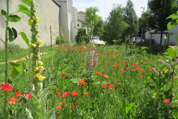 Jardin de la biodiversité Gambetta : prairie fleurie