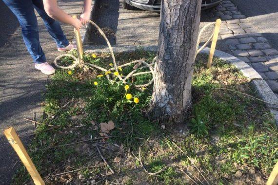 Plantations pieds d'arbres : pose de clotures